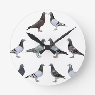 Carrier pigeons champions round clock