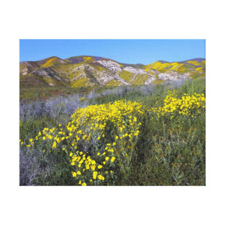 Carrizo Plain National Monument Canvas Print