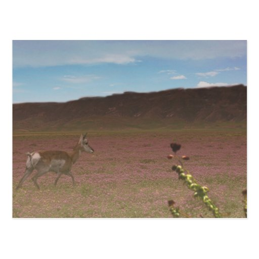 Carrizo Plain National Monument Post Card