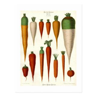 Carrots Postcard