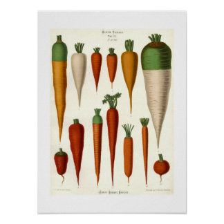 Carrots Posters