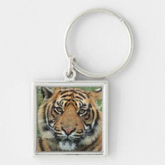 carry key tiger key ring