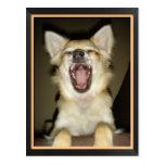 Carte postale chien chihuahua humour