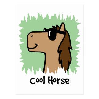 Cartoon Clip Art Cool Horse Wearing Sunglasses Post Card
