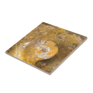 Carved Bowl Made of Fossils in Rock Closeup Photo Ceramic Tile