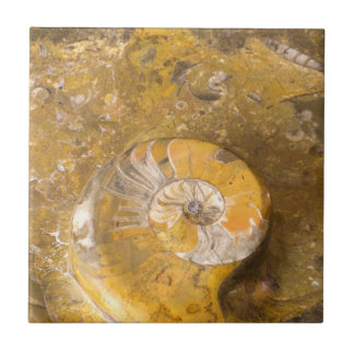 Carved Bowl Made of Fossils in Rock Closeup Photo Small Square Tile