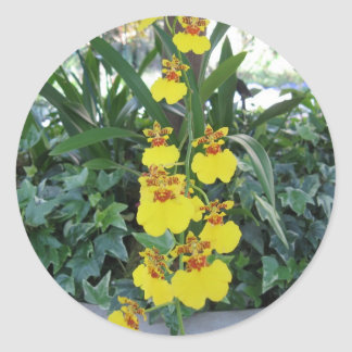 Cascading Orchids Sticker