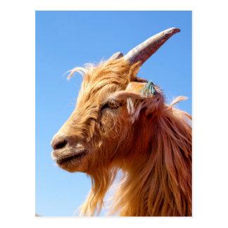 Cashmere Goat Head Detail Postcard