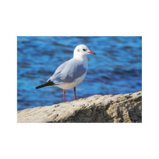 Caspian gull on background of the sea. canvas print