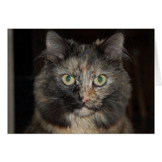 Cassie - Regal Cat Greeting Card