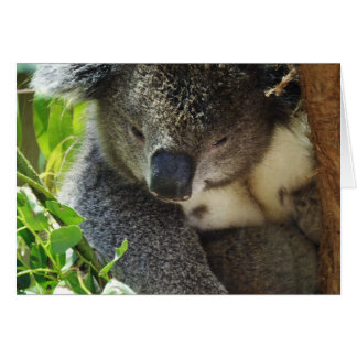 Casual Koala  Greeting Card