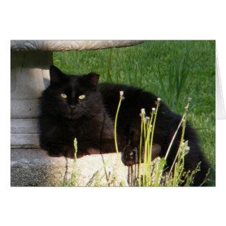 Cat 120 ~ card