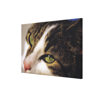 cat 2 stretched canvas prints