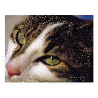 cat 2 postcard