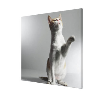 cat 3 gallery wrapped canvas