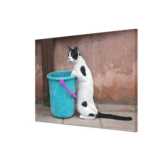 Cat and bucket, Chania, Crete, Greece Gallery Wrap Canvas