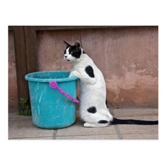 Cat and bucket, Chania, Crete, Greece Postcard