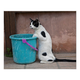 Cat and bucket, Chania, Crete, Greece Poster