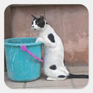 Cat and bucket, Chania, Crete, Greece Square Sticker