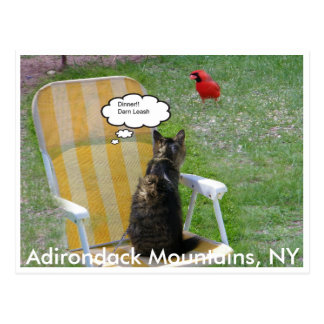 Cat and Cardinal, Adirondack Mountains, NY Postcard