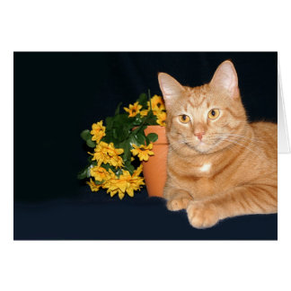 Cat and flowers greeting card