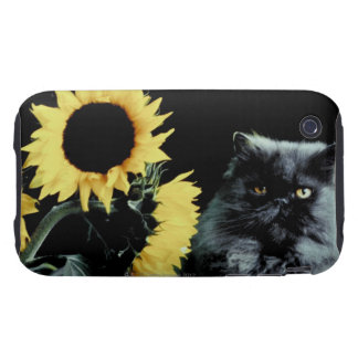 Cat and Sunflower Tough iPhone 3 Covers