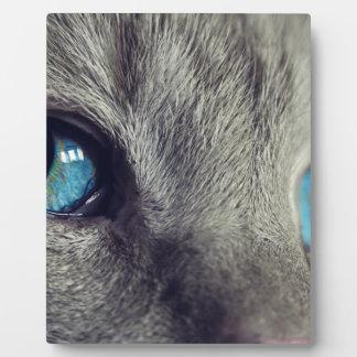 Cat Animal Cat's Eyes Eyes Pet View Blue Eye Plaque