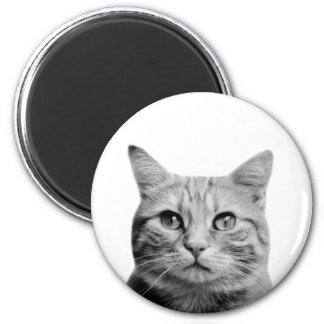 Cat animal photo cute pet portrait black and white magnet