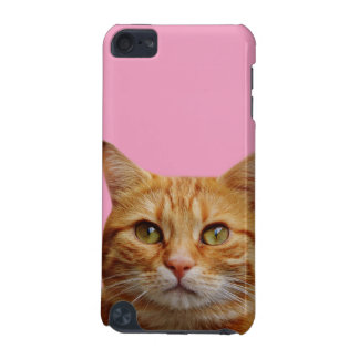 Cat animal photography cases