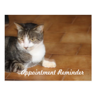 Cat Appointment Reminder Postcard