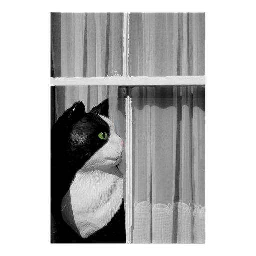 Cat at the Window Poster Print