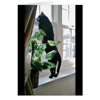Cat at Window Note Card