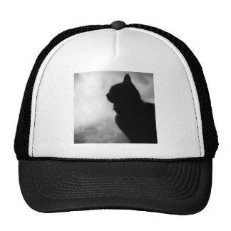 Cat ate Night Feline Animal cap Cat Puss Pussy