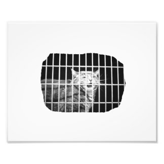 Cat behind bars with mouth open mean kitty photograph