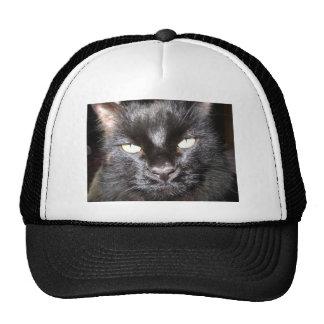 cat,black mesh hat