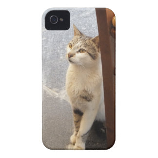 Cat Blackberry Bold case
