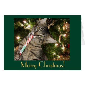 Cat Candy Cane Blank Christmas Card