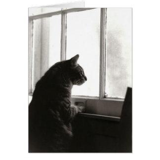 Cat Card #2