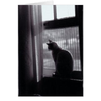 Cat Card #4