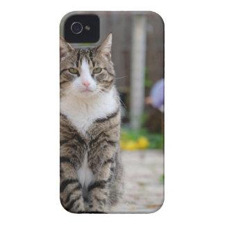 cat Case-Mate iPhone 4 cases