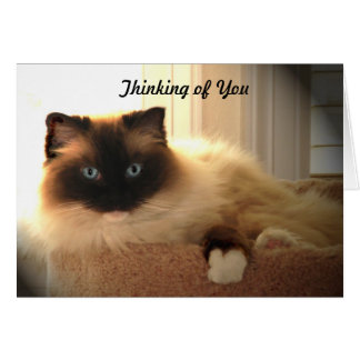 Cat Cats Ragdoll Ragdolls Kitty  Notecard