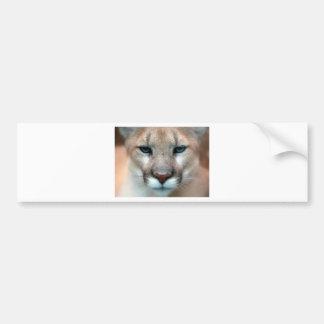 Cat Cats wild stripe print diy Anniversaries Bumper Sticker