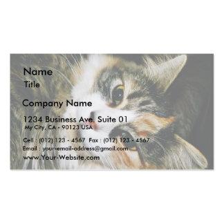 Cat Closeup Business Card
