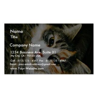 Cat Closeup Business Card Template
