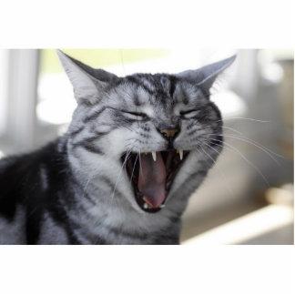 CAT CRAZY CUT OUTS