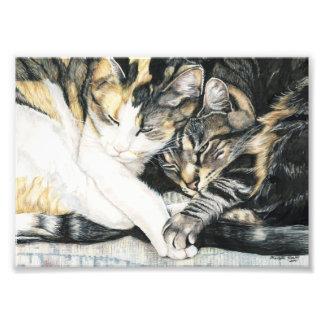 Cat Cuddle Art Print