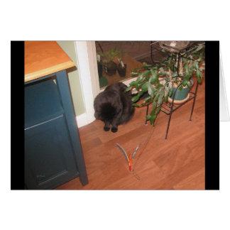 Cat Curious Greeting Card