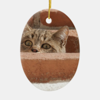 Cat Curious Young Cat Cat's Eyes Attention Wildcat Ceramic Ornament