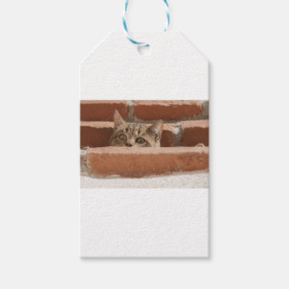 Cat Curious Young Cat Cat's Eyes Attention Wildcat Gift Tags