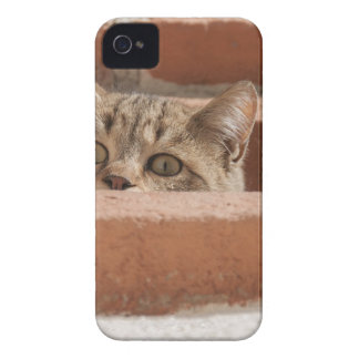 Cat Curious Young Cat Cat's Eyes Attention Wildcat iPhone 4 Case